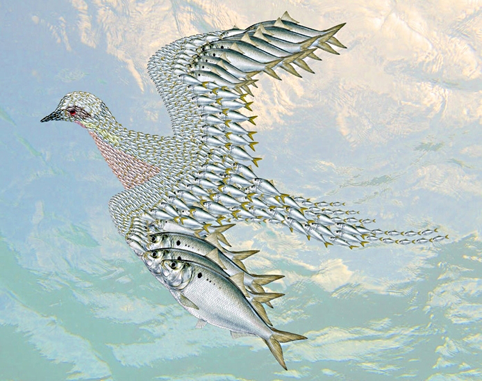 A bird drawing made of smaller fish.