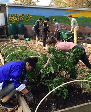 Multiple students working in a garden outside.